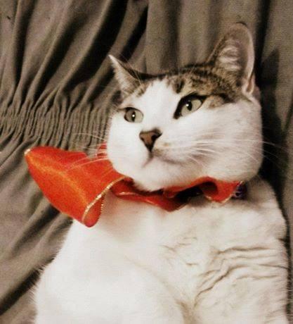 Kitty_