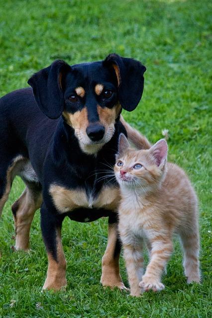 gato y perro_