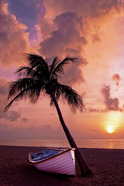 palma playa