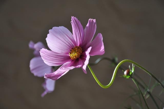 flor morada fondo gris