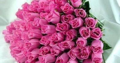 flores rosadas en botones