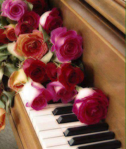 rosas ficsia