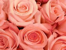 rosas salmon 1