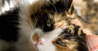 Los-gatos-