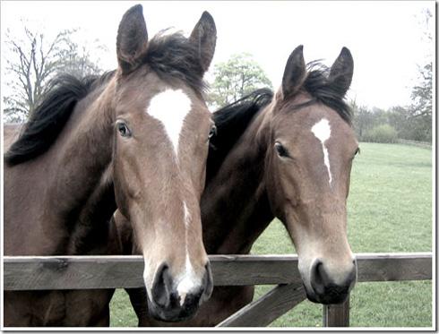 cuidados-caballos