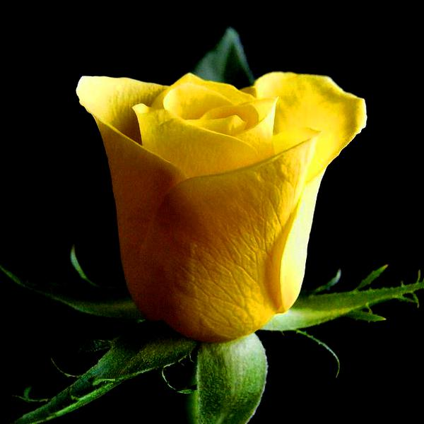 rosa valentin 1