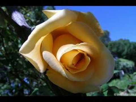 rosa valentin 2