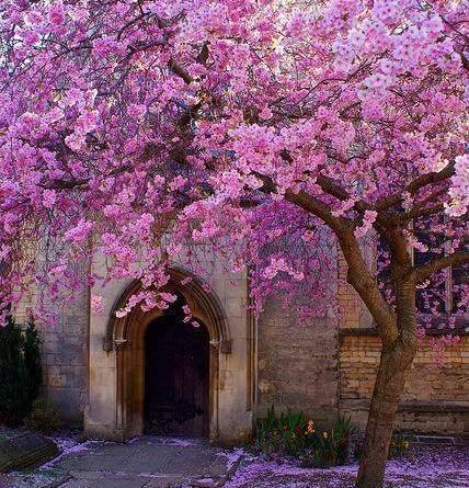 arbol rosado