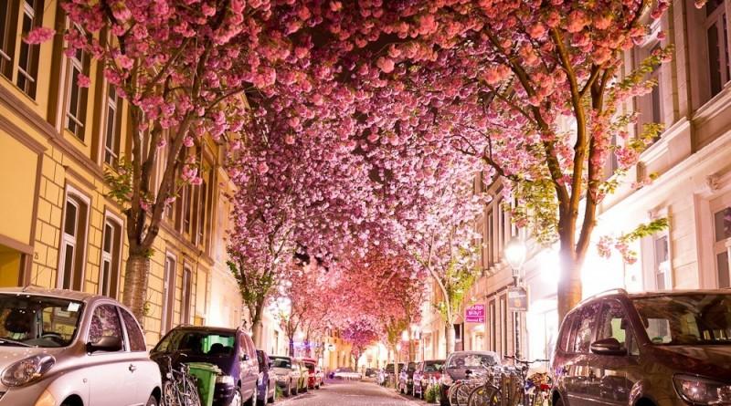 calle floresada
