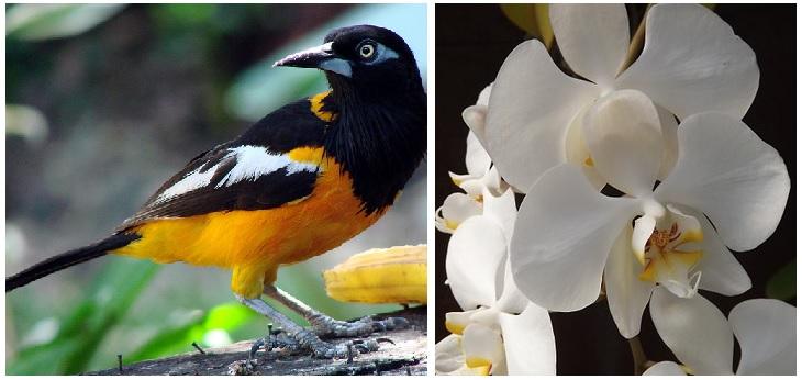 Orquidea y Turpial
