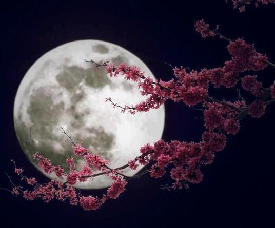 luna llena y flores
