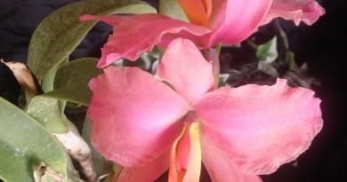 Orquídea 5 (1)