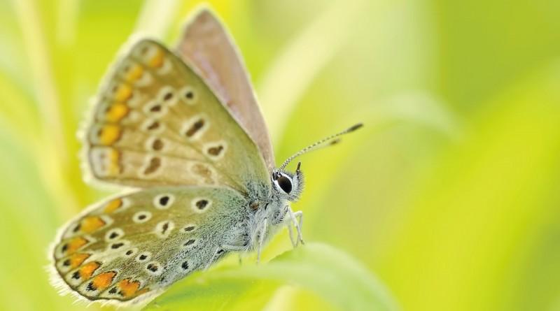butterflies-95358_960_720