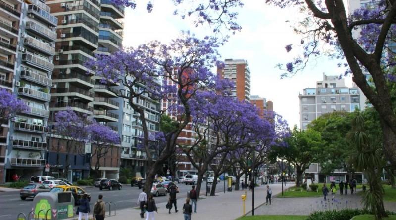 Jacarandas-Buenos-Aires-en-flor