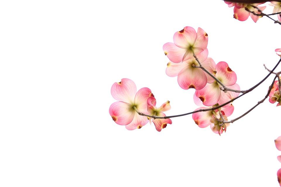 flowers-2642258_960_720