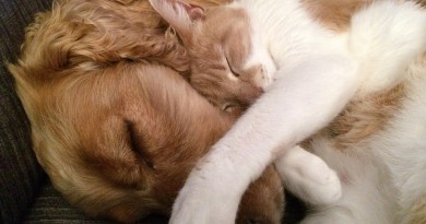 cat-and-dog-775116_960_720