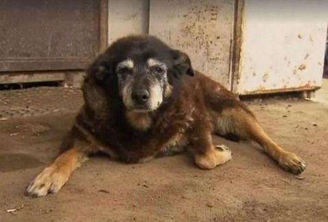 Murió Maggie, la perrita más vieja del mundo