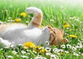El pelo del gato en la primavera