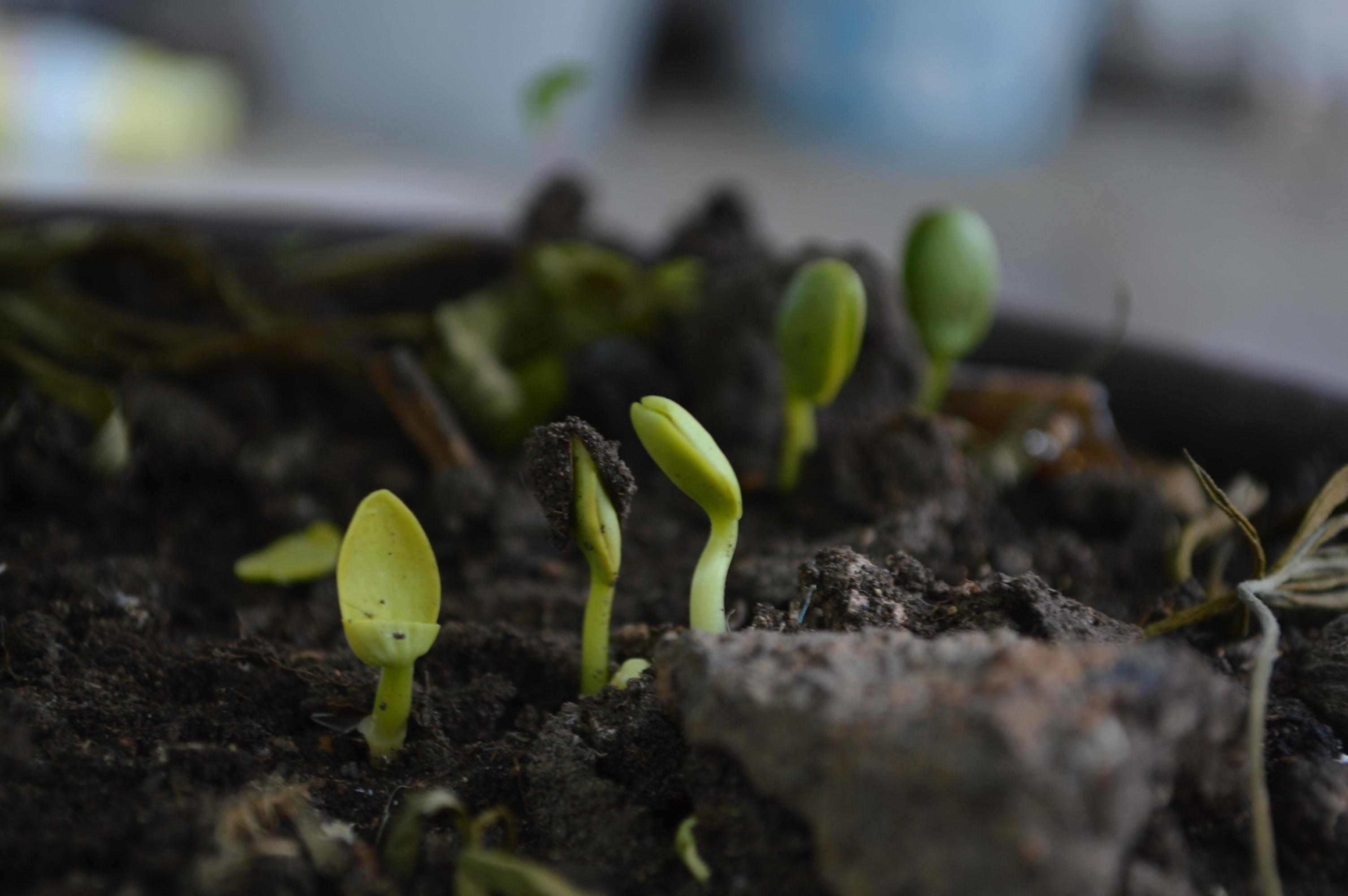 Tips para hacer un compost