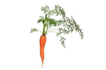 Las zanahorias y sus virtudes