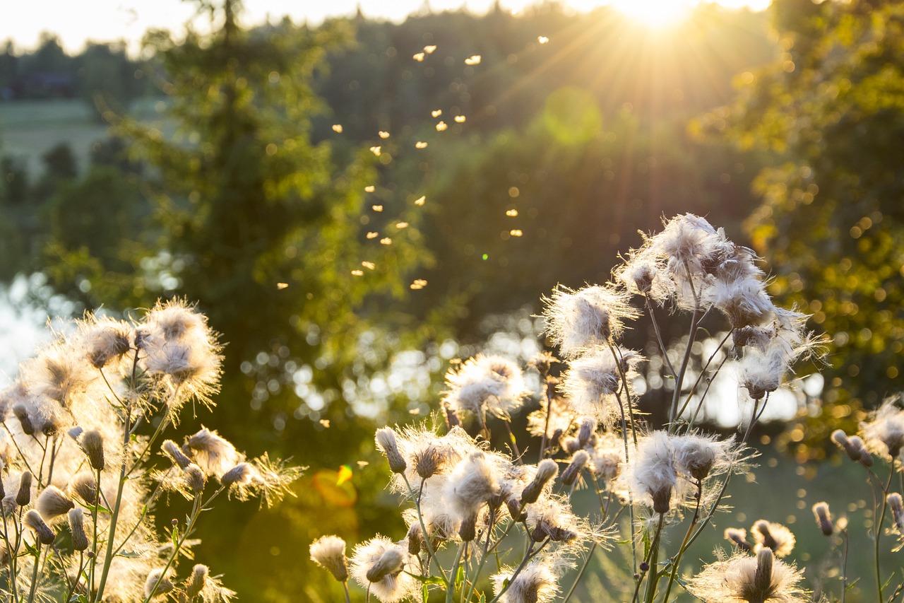 Sobre la depresión y la felicidad en tiempos de Coronavirus