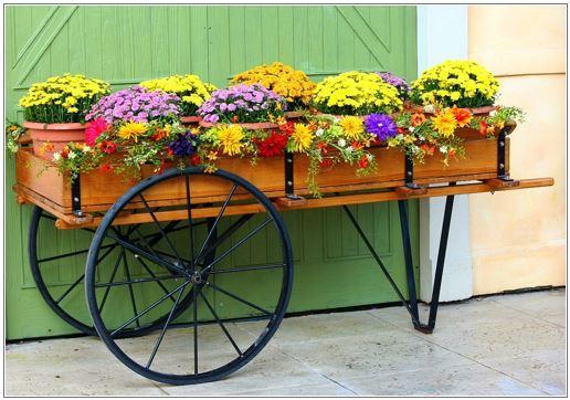 Tips para nuestras plantas en primavera